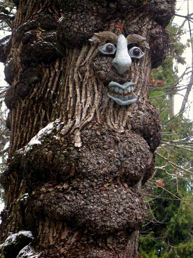 image of a tree witch